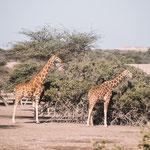 Sir Bani Yas Island Wildlifepark