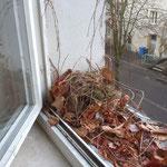 Eichhörnchen vor dem Fenster der 4a
