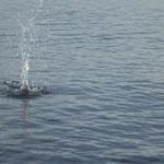 Stein der ins Wasser platscht