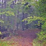 RuheForst Lohof Jesteburg, Foto: ©skb2015