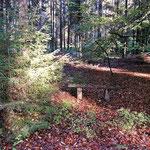 Foto: ©skb2015, FriedWald Lüneburger Heide, 10.10.2015