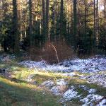 Foto: byskb - Naturpark bei Sahrendorf, Lüneburger Heide