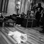 Tuki (el gato), durante el rodaje de ENTE.