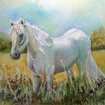 Camargue Pferd, Aquarell, ca 30 x 40, Fotovorlage: eigene