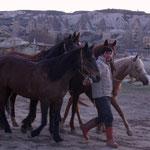 400 wild horses still live here