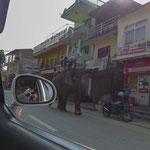 Auch diese Verkehrsteilnehmer sind auf Nepals Straßen anzutreffen.