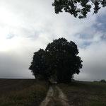Birkenweg Richtung Murchin