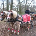 ... die Pferde schauen neugierig zu