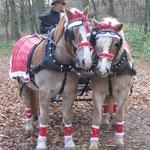 Nikolauskutsche wunderschön geschmückt. Sogar die Pferde haben Nikolausmützen an.