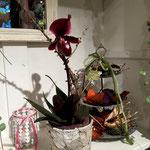 Orchideen Bluama Hüsli Bad Ragaz