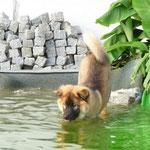 mein Schwimmteich