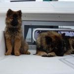 Akima und ich auf dem Schiff
