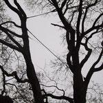 der Versuch einen Baum zu retten
