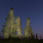 Baumbeleuchtung mit Taschenlampe