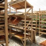 ドライフルーツ作りは、夫婦で立ち上げたばかりの作業場を見学。400本の契約した樹木を確保し10数人の人たちが働く。雇用創出のためにもバラングル村で始めたいところだが、樹木の確保と果実の質の向上が課題である。