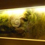 Arte digitale, applicazione su parete