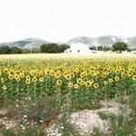 """Sole di Toscana"", arte digitale"