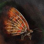 Illustrazione farfalla