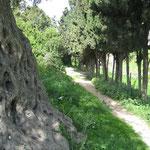 Weg auf dem Karmel zu der Elia Quelle