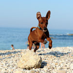 Dwarf Rat Pack´s Nutella im Urlaub