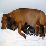 Tabatha mit ihren Sechslingen nach der Geburt