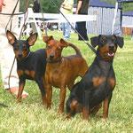 Leona, Tabatha und Tyson in Varazdin