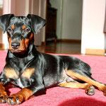Achilles mit 2 Jahren