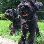 Coco mit Papa Benji