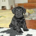 Die kleinen B´s mit sechs Wochen