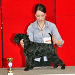 Helene Wohak mit Nana bei der IHA Graz | 3. Platz bester Jugendhund im Ehrenring