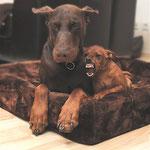 Nutella und ihr bester Freund