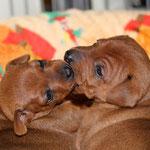 Die Kleinen O´s mit drei Wochen