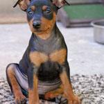 Leonora, 8 Wochen