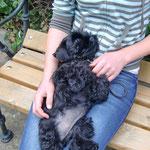 Erster Besuch in der Hundeschule auf Lenchens Schoß