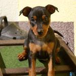 Leonora, 7 Wochen