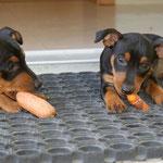Die Brüder sind schon ausgezogen, nun müssen sich die Mädchen gemeinsam beschäftigen - Karotten essen im Doppelpack ist da genau das Richtige!