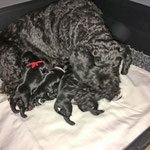 Newborn :-)