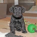 Bonita mit sechs Wochen