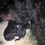 Die ersten kleinen B´s während der Geburt
