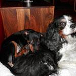 Romeo mit seiner neuen Hundefreundin