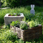 """Installation """"urban gardening"""" 2016 - Zeitungspapier, Haselnuss"""