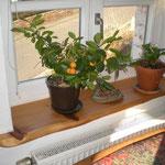 Fensterbank 2 Wohnzimmer Kirsche