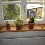 Fensterbank 1 Wohnzimmer Kirsche