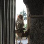 in einem kleineren Tempel wohnen die Affen,