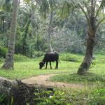 Ausflug in die Backwaters: Rasenmäher
