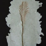 "Contemporary Fossil -  16""x 12"" Ostrich Fern casting with natural coloration"