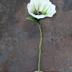 Blume Nr. | Flower No. 52 |   20 €   | ca. 30 cm