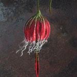 Glockenblume Nr. | Bell flower No. 5 |   35 €   | Ø ca. 14 cm