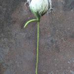 Blume Nr. | Flower No. 55 |   24 €   | ca. 35 cm