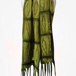 Schal Nr. | Scarf No. 113  |  130 €   |   Chiffon/Merino gefilzt/felted   |   Individualisierbar